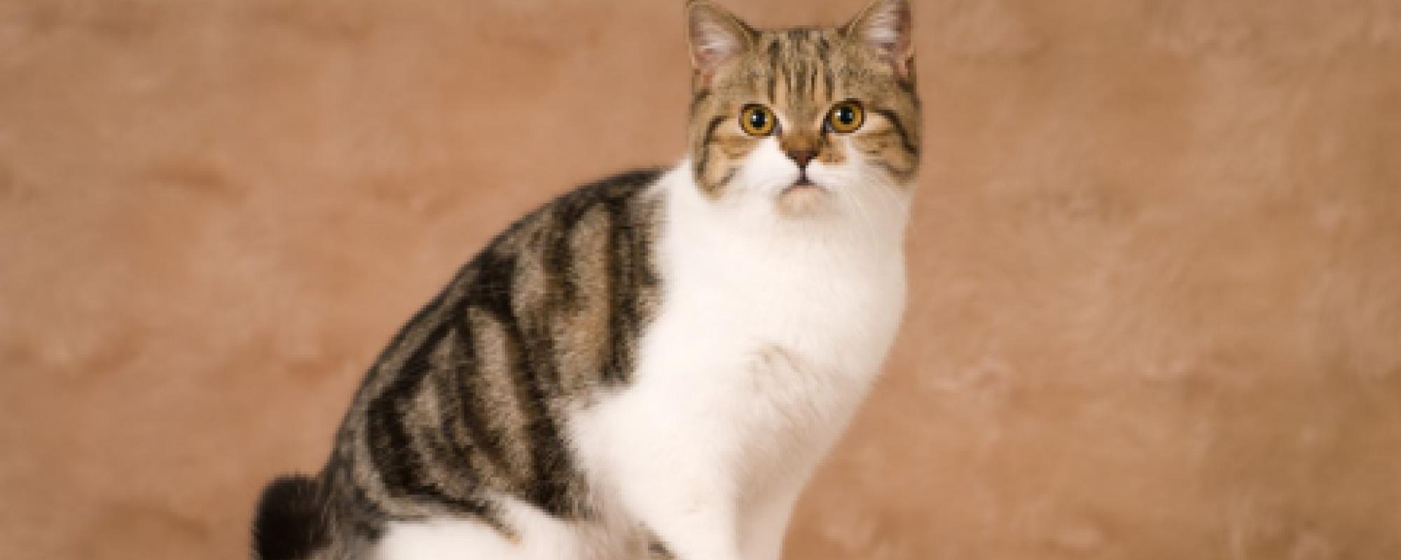 Cat Number 1